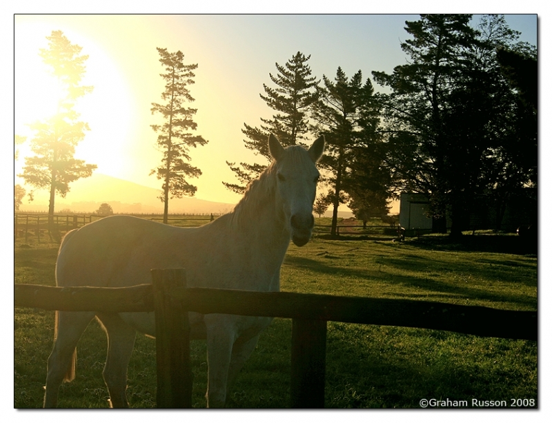 Agterpaarl horse sunset