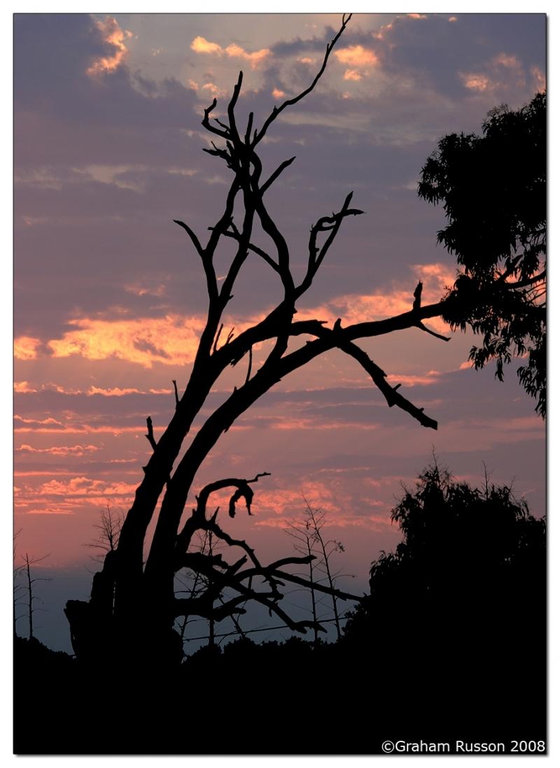sunset pond tree plattekloof