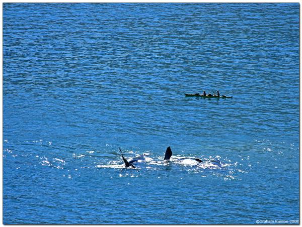Darwin whale hout bay