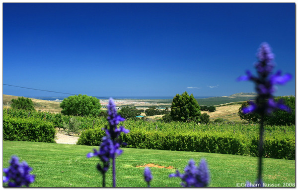 lavender hillcrest wine