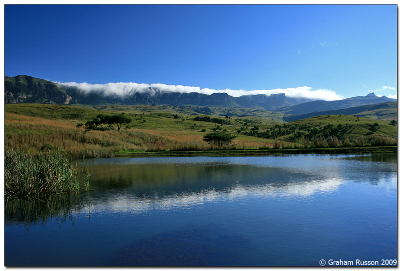 Drakensberg ALpine Heath