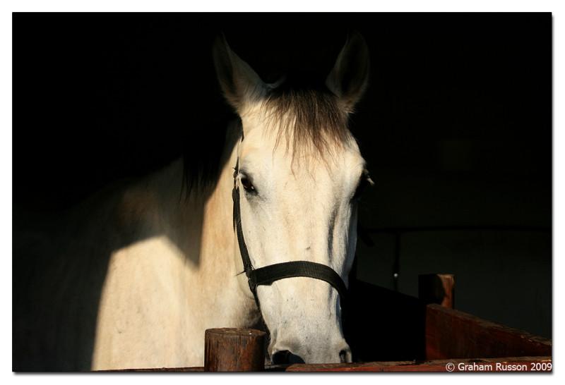 drakensberg horse