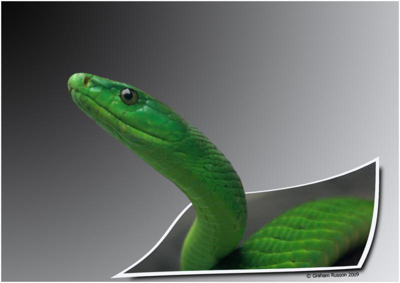 zoo snake oob