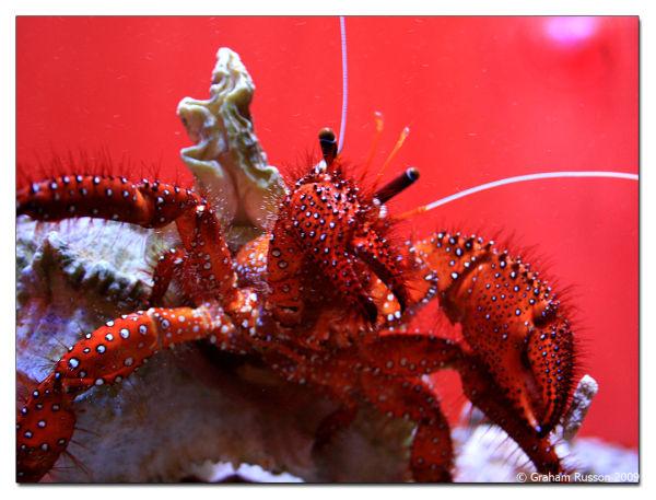 lobster va waterfront