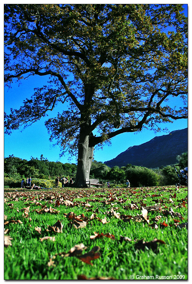 Autumn kirstenbosch