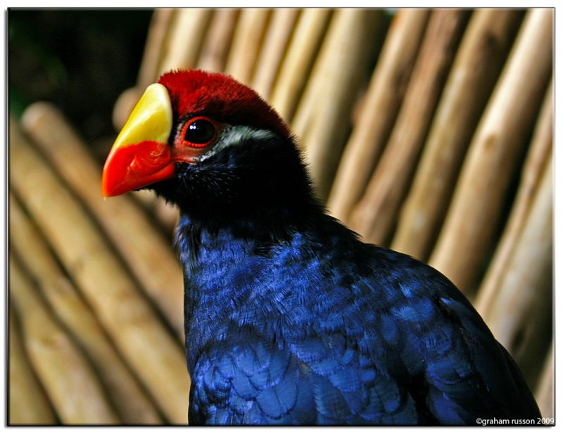 colourfull bird