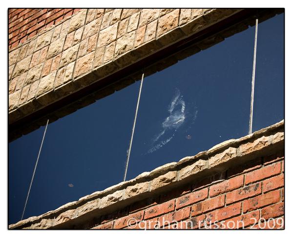 splat pigeon