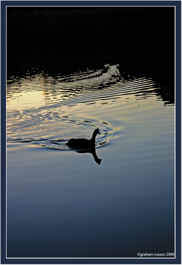 hornbill reflection water
