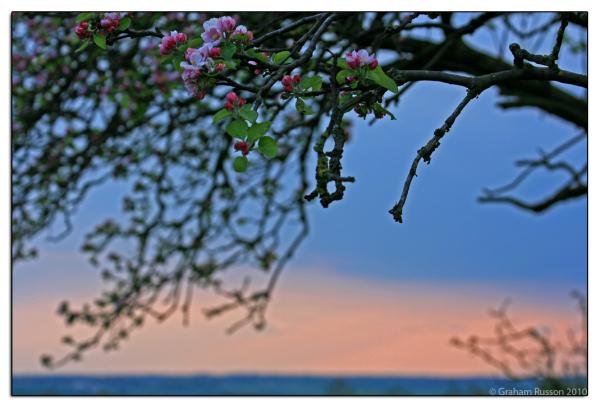 blossom sunset