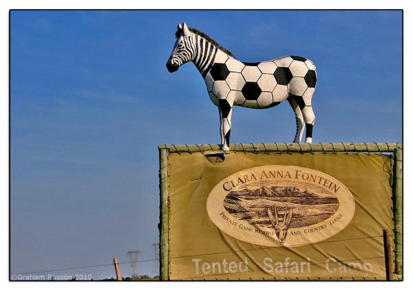 zebra soccer world cup