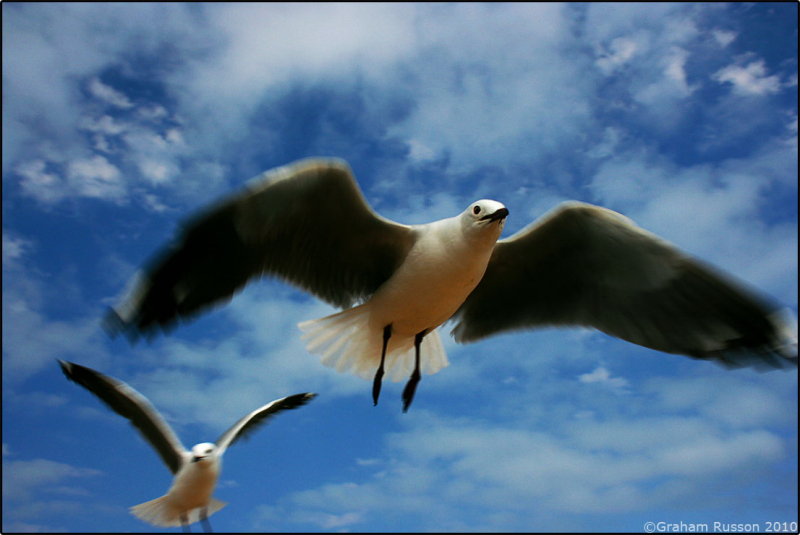 bird sea gull