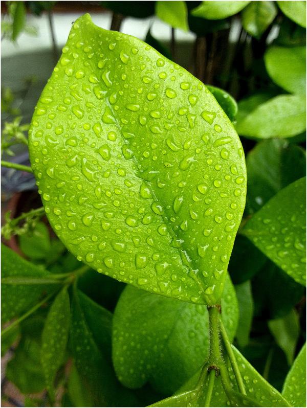 Samsung - Leaf