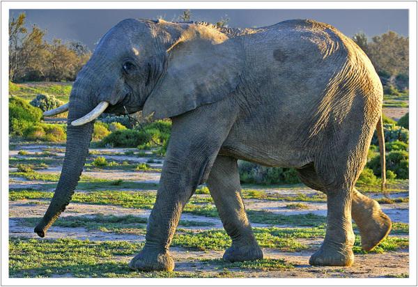 Elephant inverdoorn