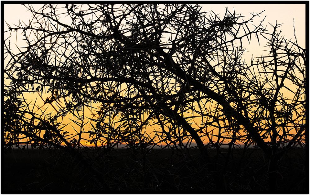 inverdoorn thorn dawn