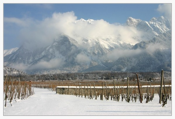 Mountains and Wine