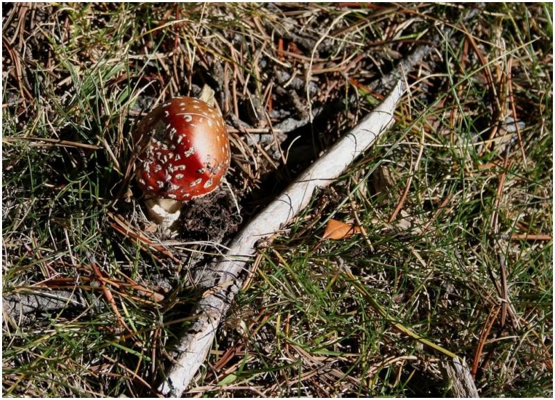 last mushroom