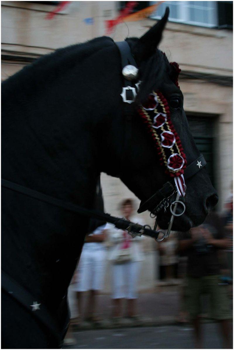 jaleo horse