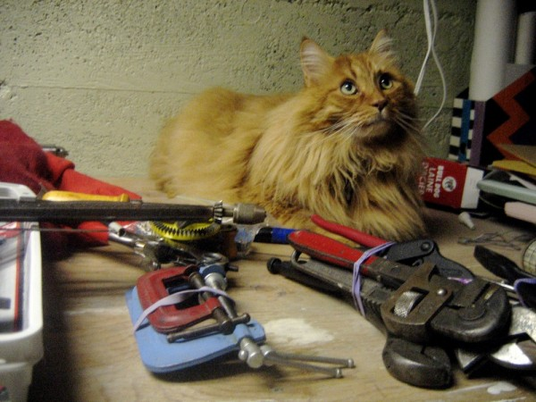 Cat with tools