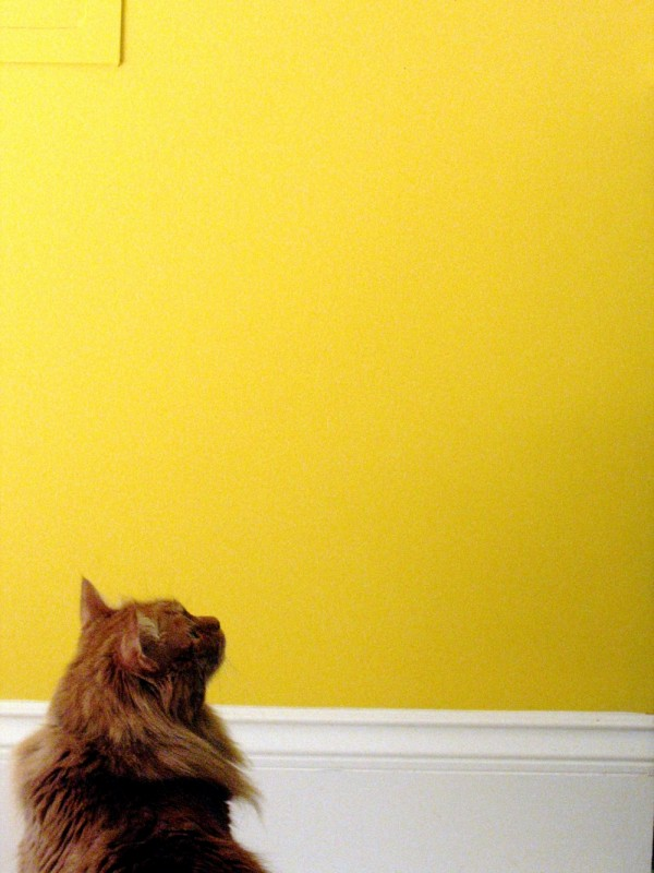 cat and yellow wall