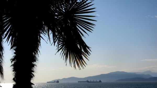 palm with tankers