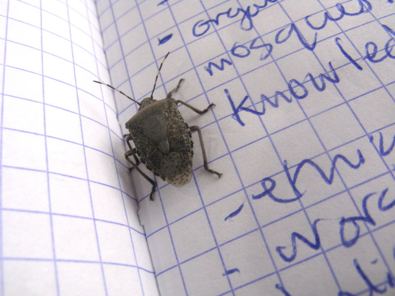 studying insects