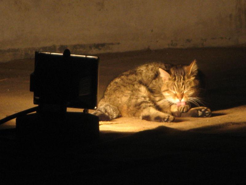 cat in spotlight