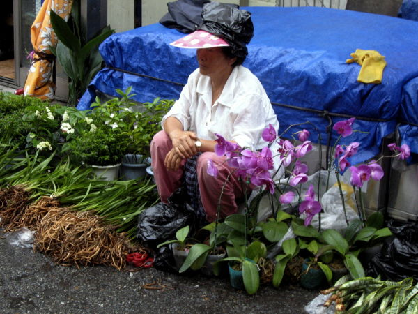 selling orchids on the street in korea