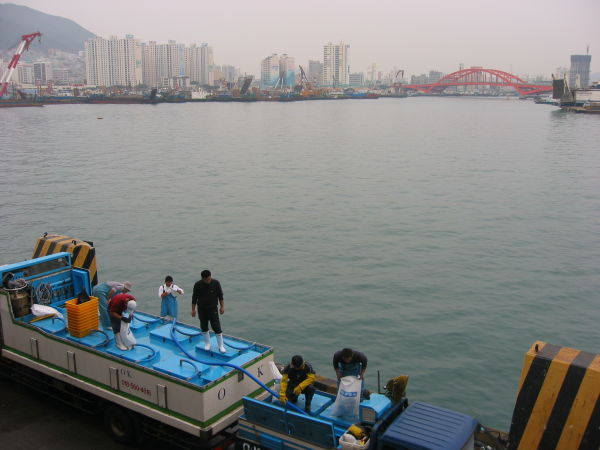 my side of Busan