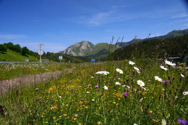prado de montaña