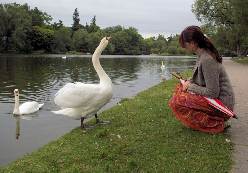 sammy and the swan