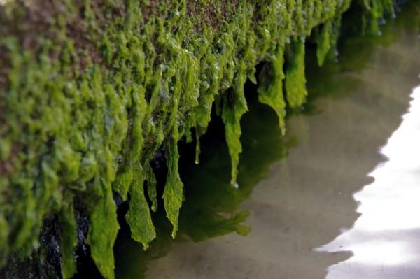 megan's seaweed