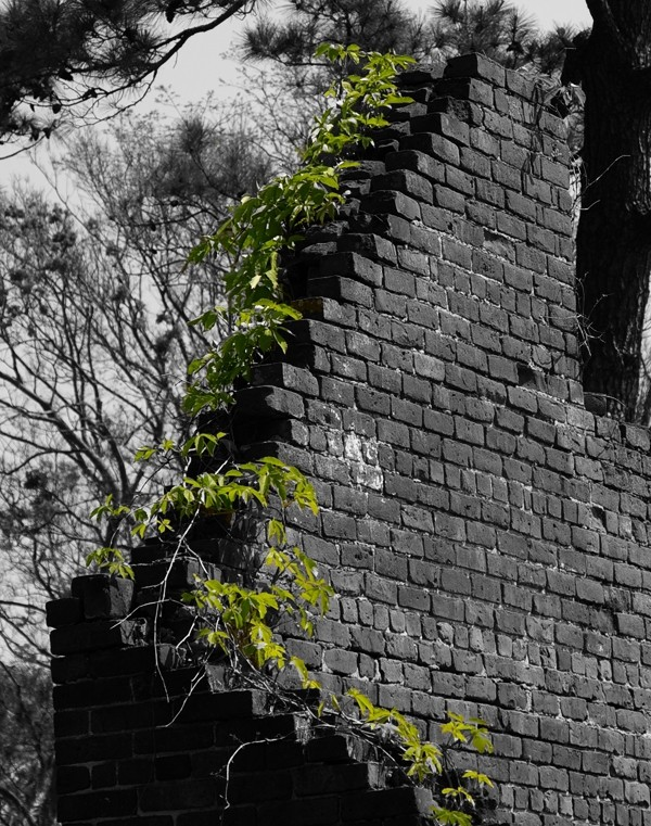 brick and vine
