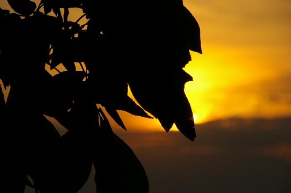 walnut summer sunset