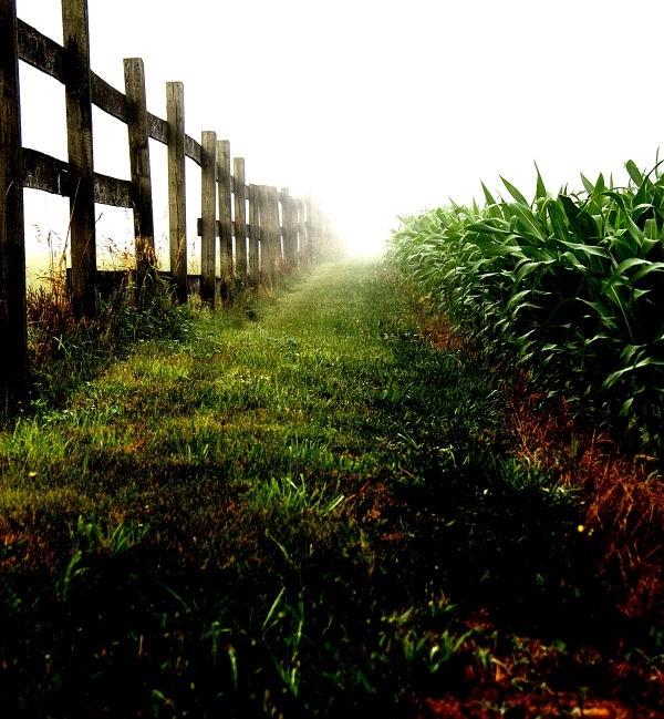 fog in the field (2)