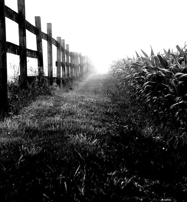 fog in the field (3)