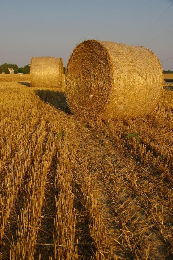 garden state - hay bales