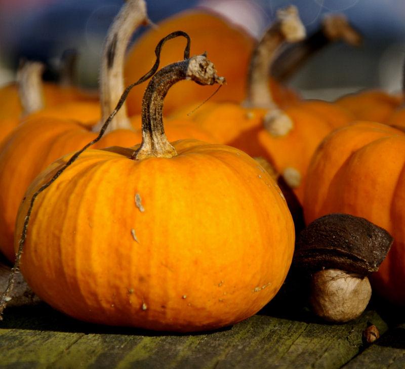 pumpkin and walnut
