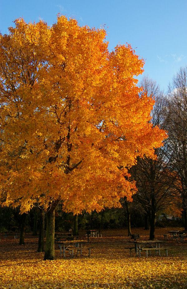 fort mott: autumn fire