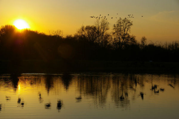 sunset geese.3