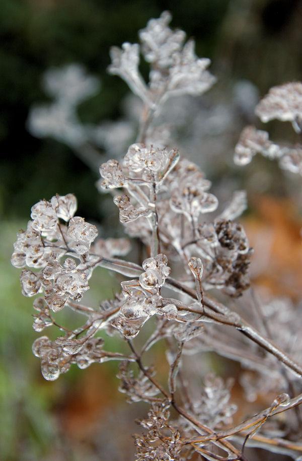 frozen.2