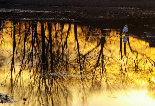 salem river reflections