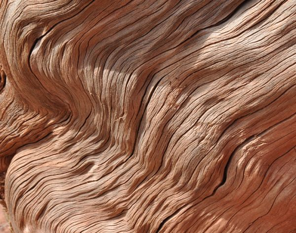 arizona: weathered wood
