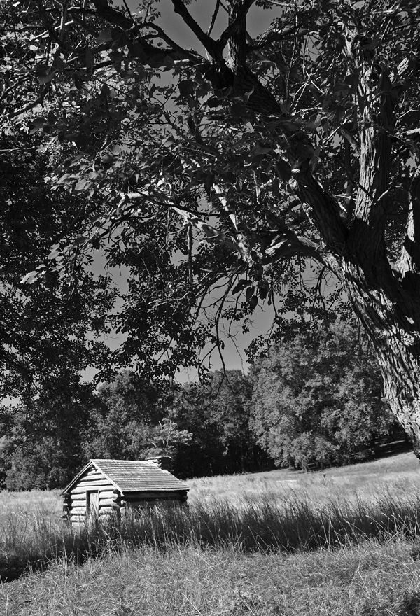 cabin and tree