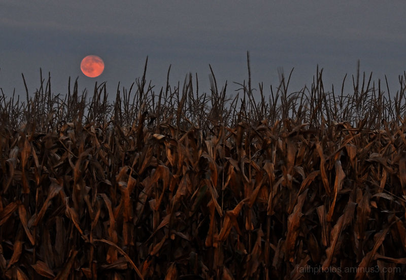 corn moonrise