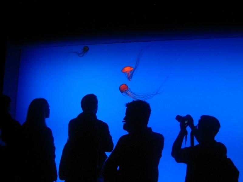Jellyfish at the Georgia Aquarium.