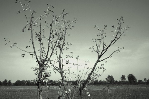 green and barren