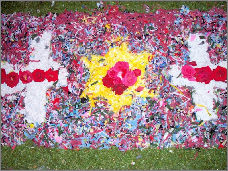 rosas tapete flores