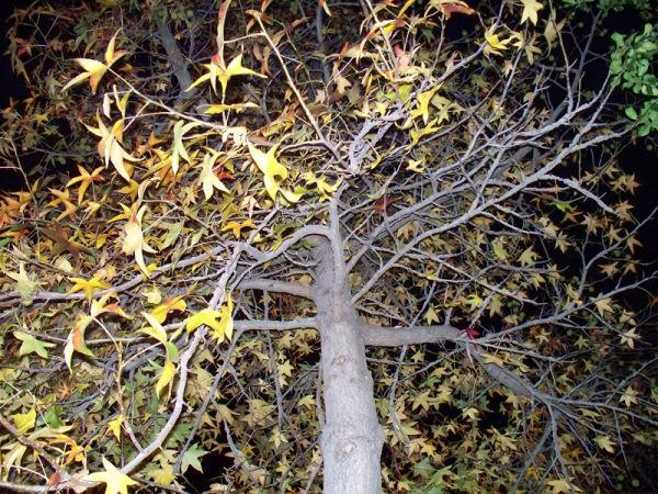 Night Leaves