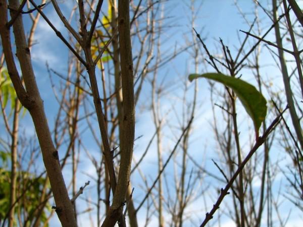 twigs winter