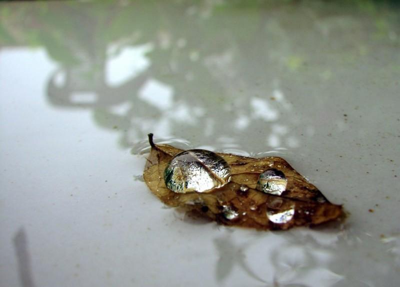 fallen dry leaf in rain